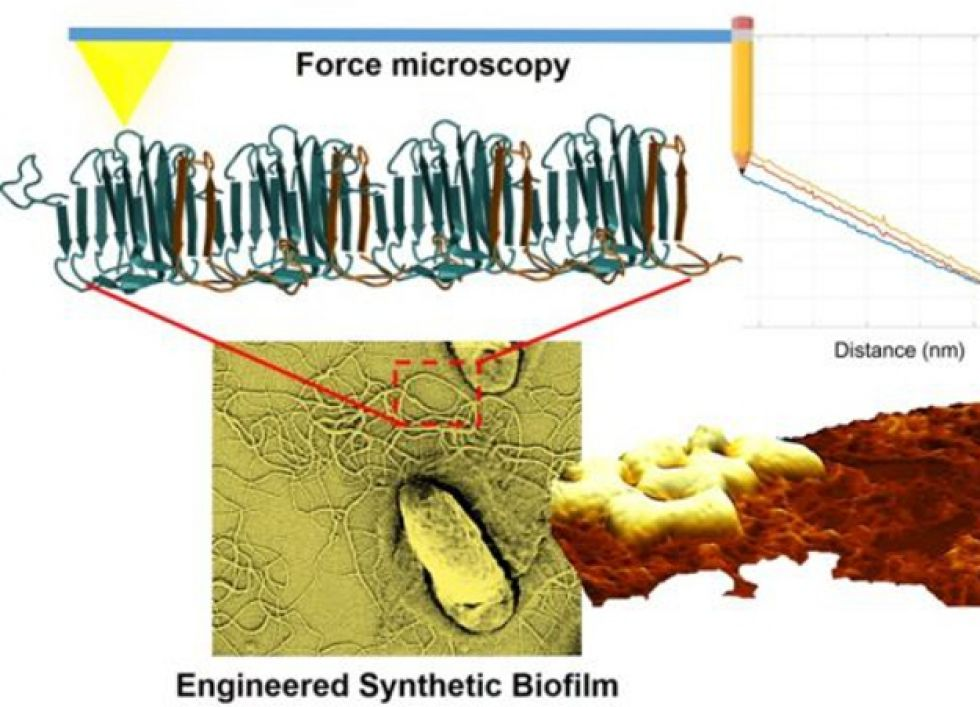 Atomic Force Microscopy Imaging and Spectroscopy of Biological Materials